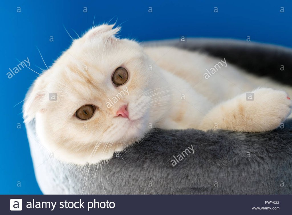 Beige Couch Stock Photo Beige Couch Stock Image Alamy The Best Way To Keep Clean Beige Leather Sofa