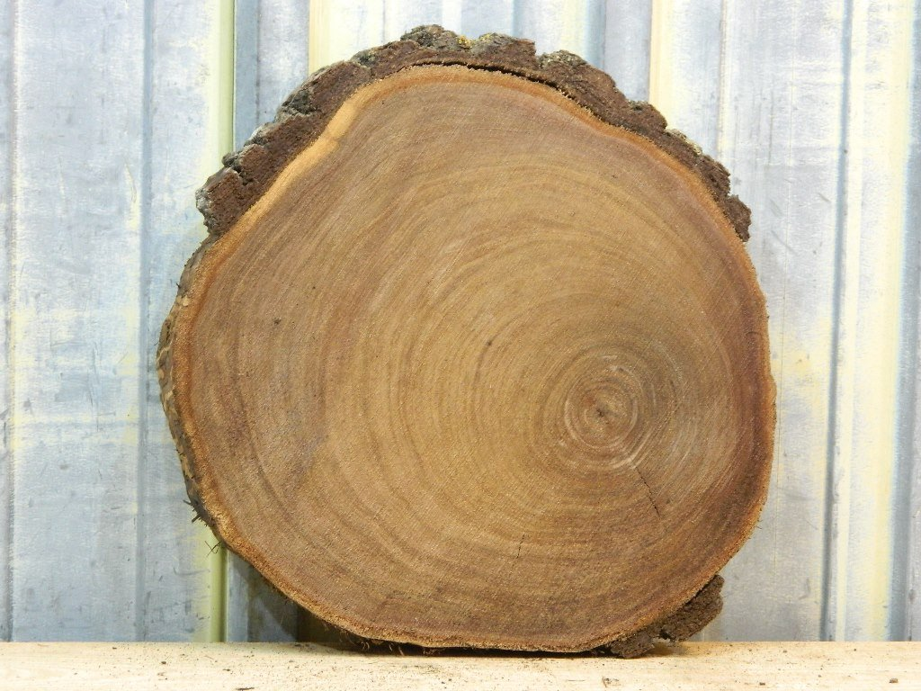 Black Walnut Live Edge Cut Tree Circle Wood How To Build Round Wood Table Tops