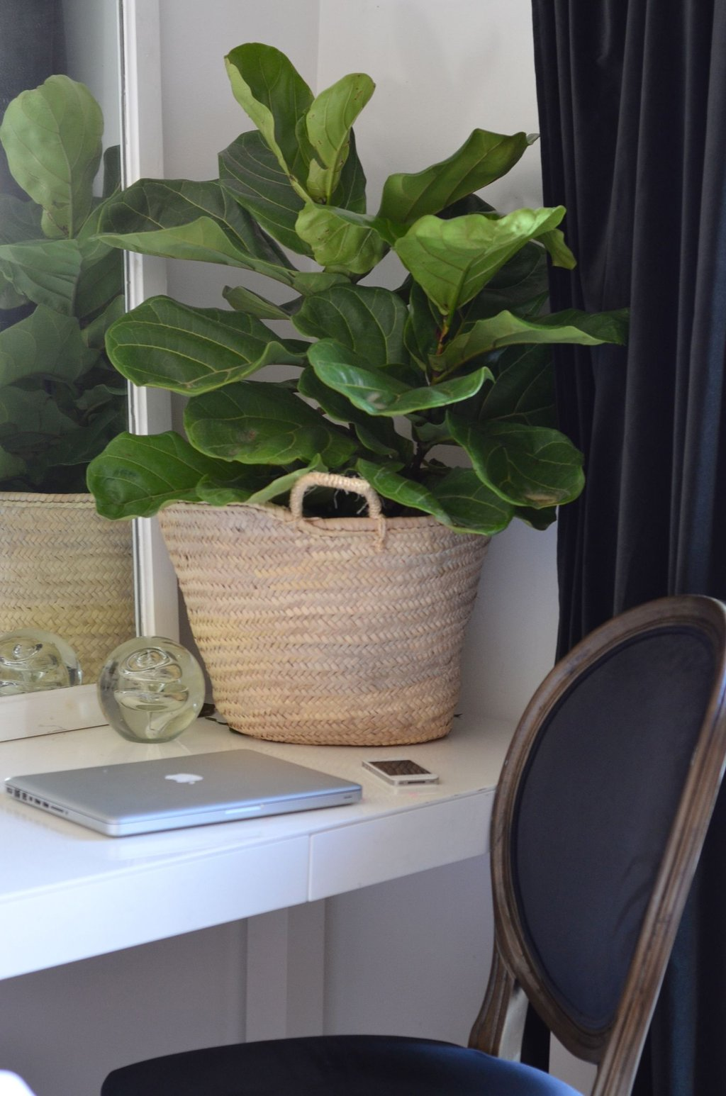 Fiddle Leaf Fig Nester 39 House Plants Fiddle Leaf What Is A Parsons End Table?