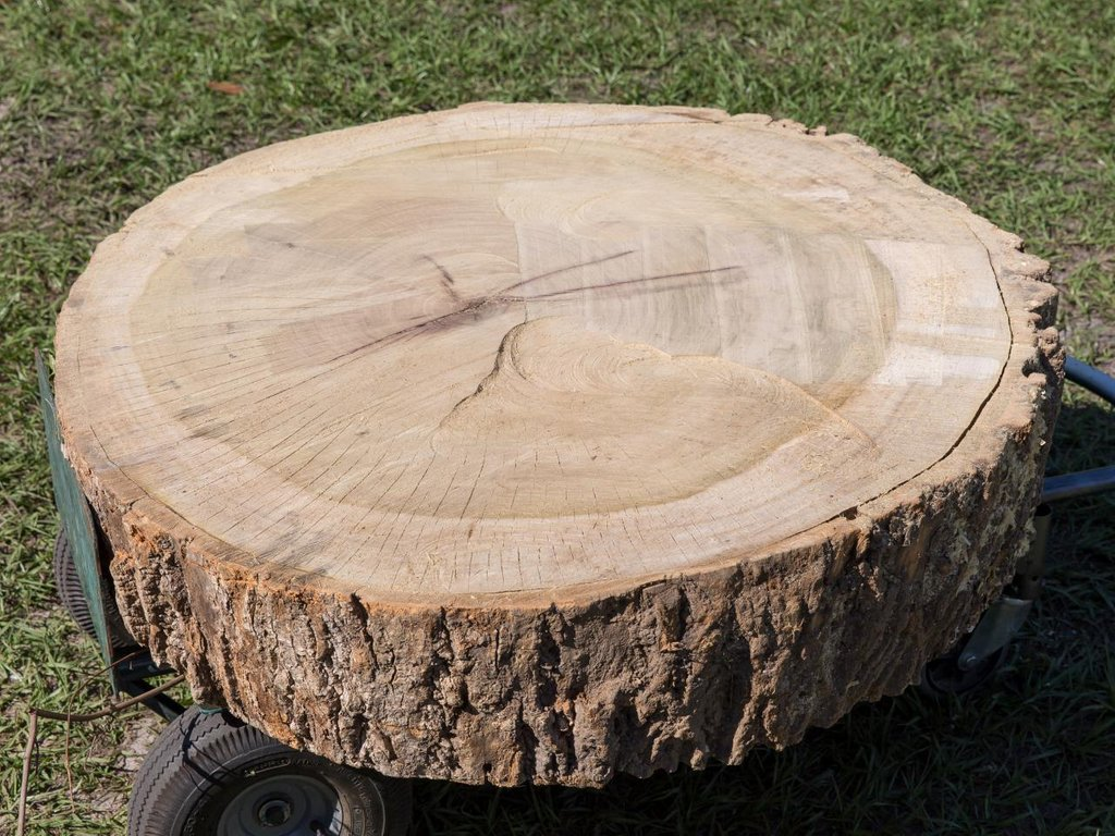 Furniture Comfy Tree Stump Coffee Table Home Make A Tree Trunk Coffee Table