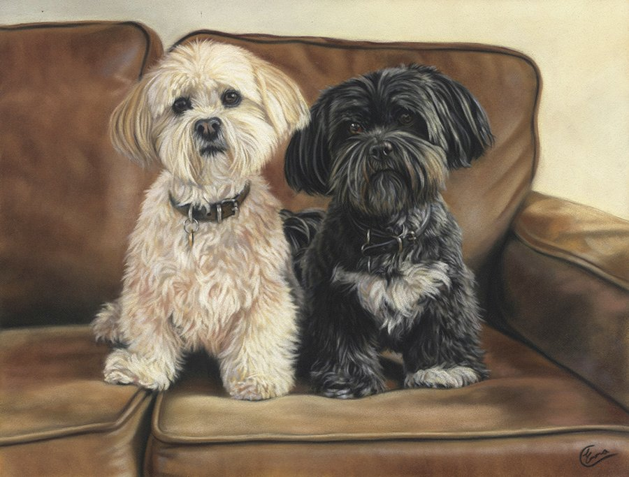 Lhasa Apso Pair Emma Colbert Art Northern Ireland Suede Couch Home