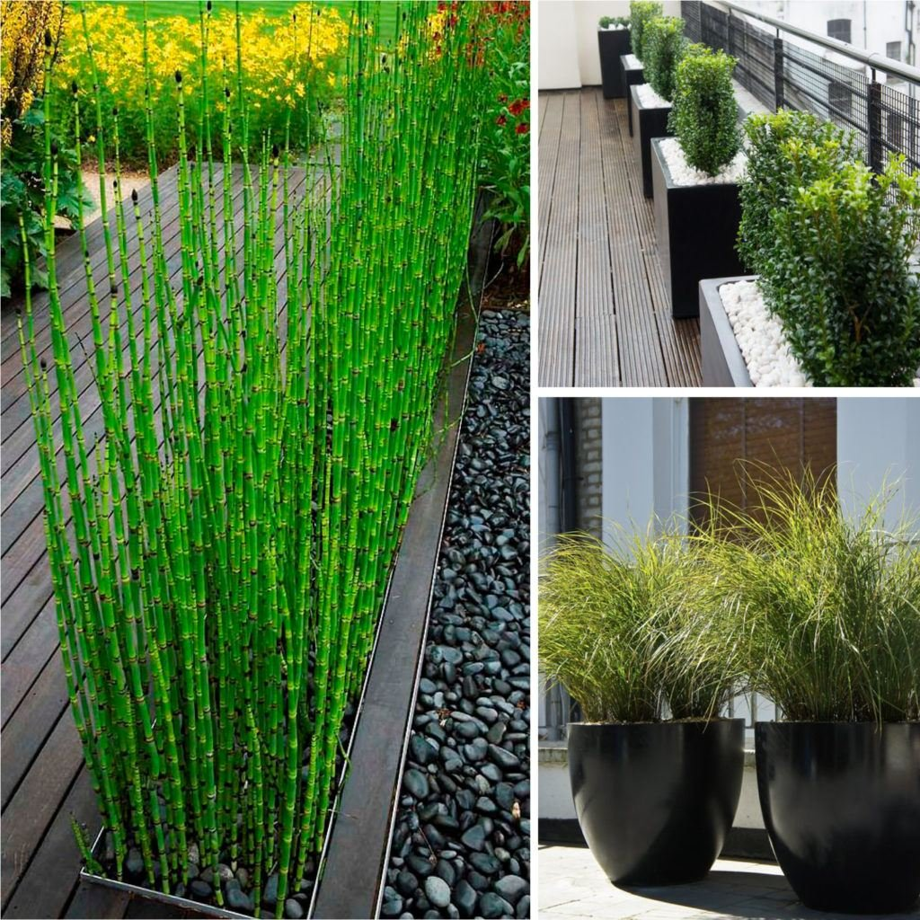 Outdoor Patio Tall Outdoor Privacy Patio Plant Tall Considering For Square Bistro Table