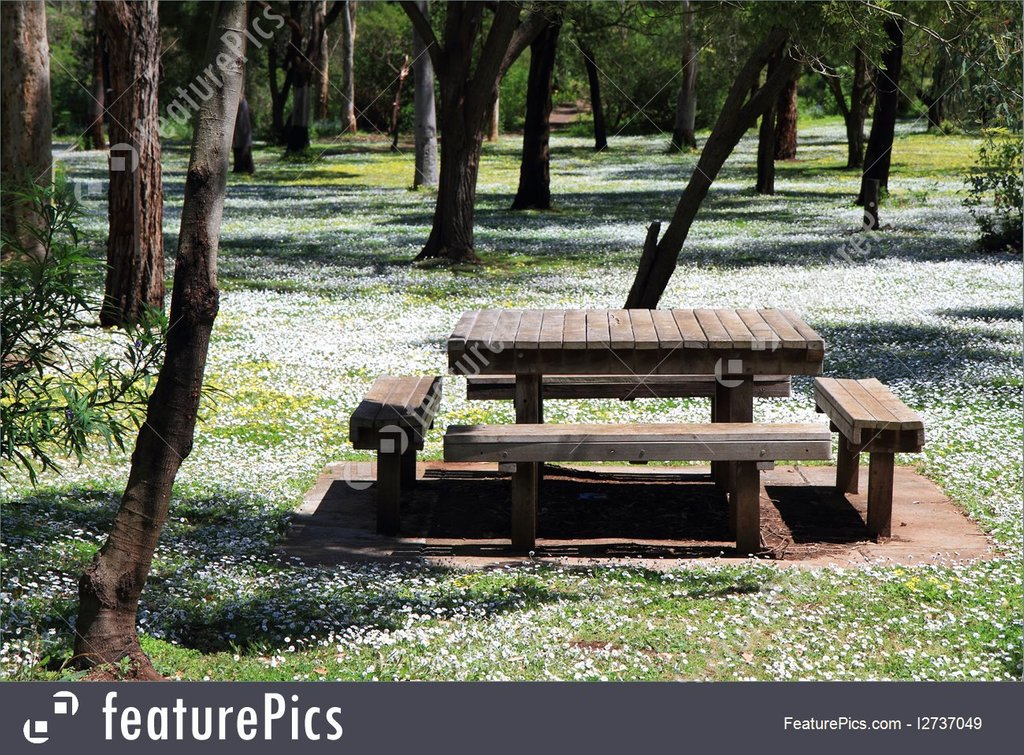 Outdoor Picnic Table Tree Flower Stock Decorating Square Picnic Table