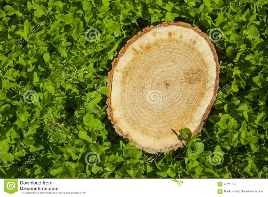 Tree Stump Grass Top View Stock Photo Image Make A Tree Trunk Coffee Table