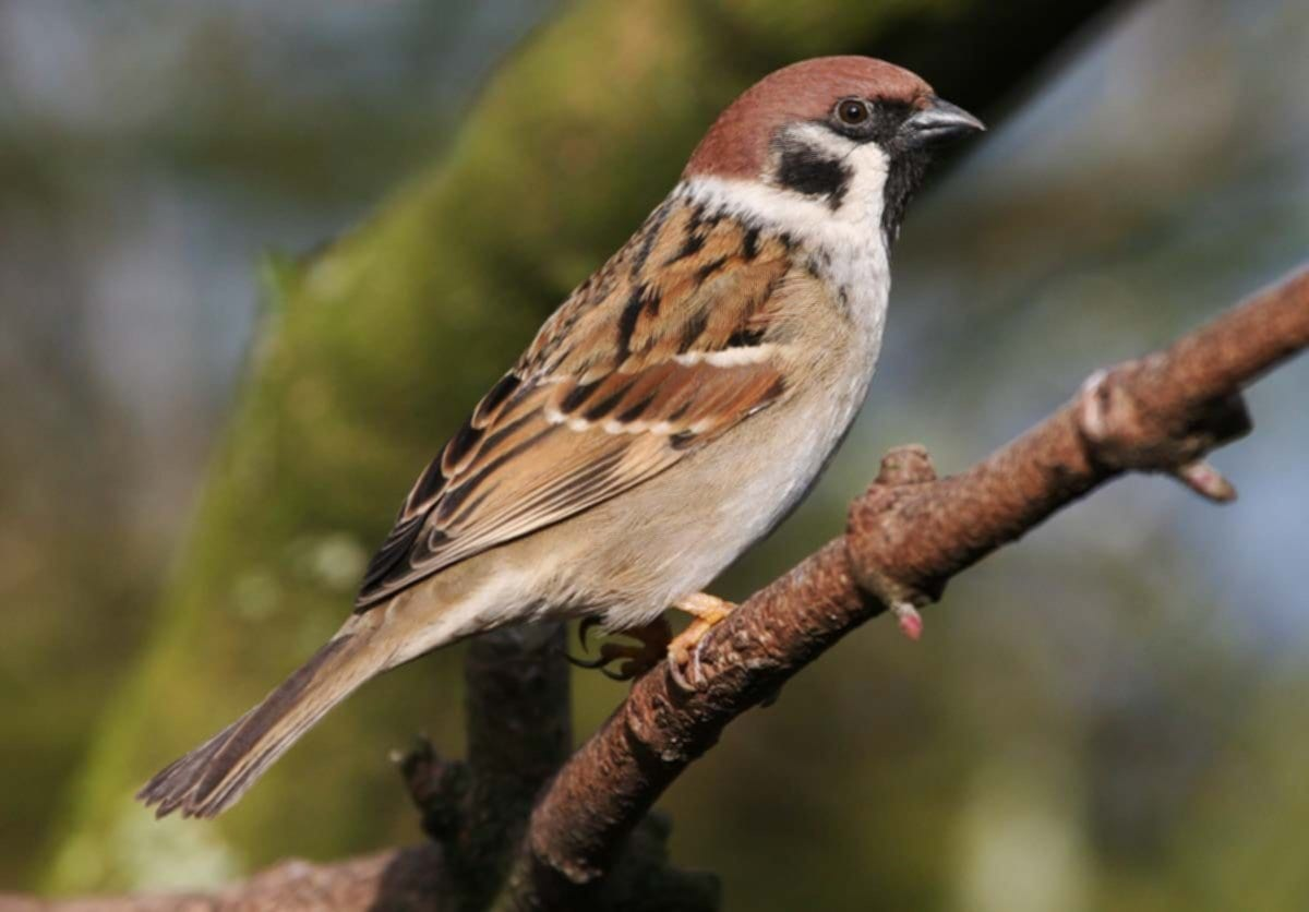 Innocent Sparrow Pictures