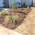 Drought Resistant Plant List Low Voltage Landscape Lighting